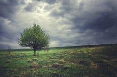 Eenzame het groeien appelboom op een achtergrond van donkere onweerswolken royalty-vrije stock foto's