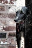 Eenzame hond Royalty-vrije Stock Fotografie