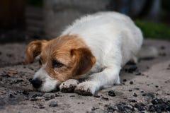 Eenzame hond stock foto's