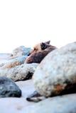 Eenzame hond Royalty-vrije Stock Afbeeldingen