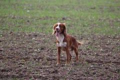 Eenzame hond Royalty-vrije Stock Foto