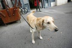 Eenzame hond in bijlage Stock Foto's