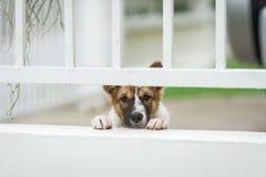 Eenzame hond in bruine kooi Royalty-vrije Stock Foto's