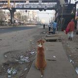 Eenzame hond stock fotografie