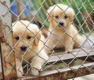 Eenzame hond in kooi Royalty-vrije Stock Foto's
