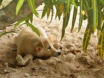 Eenzame Hond onder de Boom Stock Foto's