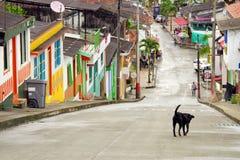Eenzame hond op een straat in Buenavista, Quindio royalty-vrije stock afbeelding