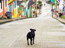 Eenzame hond op een straat in Buenavista, Quindio stock foto's