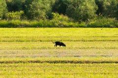 Eenzame hond uit in een landbouwbedrijf Een landelijk landschap Stock Fotografie