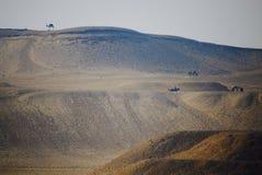 Eenzame Kameel Verre Woestijn Stock Foto