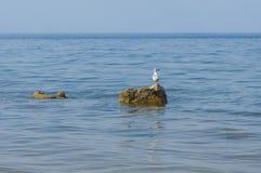 Eenzame Kaspische meeuw op een rots in Kakhovka-Reservoir Stock Foto's