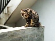 Eenzame Kat stock foto