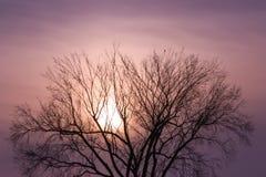 Eenzame kraai bovenop een boom Stock Afbeeldingen