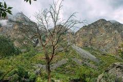 Eenzame leafless boom in de bergen Dode boom op de achtergrond van rotsen en mist stock foto's