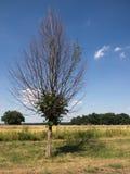 Eenzame leafless boom met een groen midden Royalty-vrije Stock Afbeelding