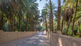 Eenzame leurder in Al Ain Oasis, Verenigde Arabische Emiraten royalty-vrije stock afbeeldingen