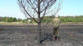 Eenzame mens die zich onder de gebrande boom op het gebied na wildfire bevinden, de ramp van de ecologiecatastrofe, wanhoop en stock video