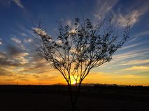Eenzame Mesquite-Boom bij Zonsondergang Stock Afbeelding