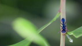 Eenzame mier op tak Stock Fotografie