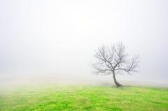 Eenzame naakte boom Royalty-vrije Stock Foto's