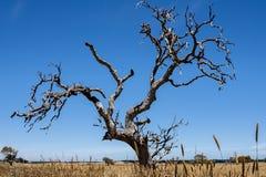 Eenzame naakte boom in de woestijn van Australië, Noordelijk Grondgebied, fisheye lens stock foto