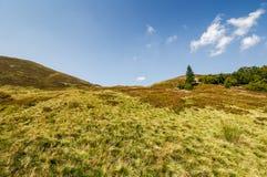 Eenzame nette boom op een grasrijke weide van de bergrand Stock Afbeeldingen