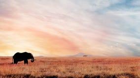 Eenzame olifant in de savanne bij zonsondergang Afrikaans artistiek beeld Nationaal park Serengeti Stock Foto