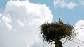 Eenzame Ooievaar die zich in het Geregelde Nest bevinden stock videobeelden