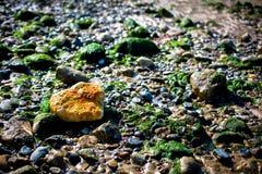 Eenzame Oranje Rots in een Overzees van Groen royalty-vrije stock afbeeldingen