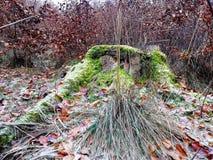 Eenzame oude stomp in een bosopen plek royalty-vrije stock afbeeldingen