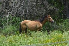 Eenzame paarden Stock Foto