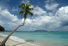 Eenzame Palm Royalty-vrije Stock Fotografie