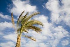 Eenzame palm stock afbeelding