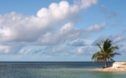 Eenzame palm Stock Afbeeldingen