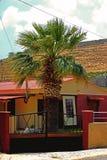Eenzame Palm Royalty-vrije Stock Afbeelding