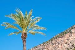 Eenzame palm op de berg Stock Foto
