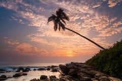 Eenzame palm op het strand bij zonsondergang Stock Afbeelding