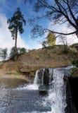Eenzame pijnboom dichtbij waterval Stock Foto