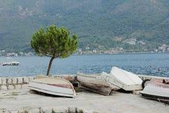Eenzame pijnboom en boten Stock Fotografie