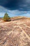 Eenzame pijnboom op heuvel 2 Stock Afbeeldingen