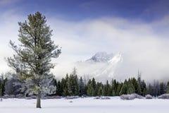 Eenzame pijnboomboom in de winter met mist en de berg van Idaho Stock Afbeeldingen
