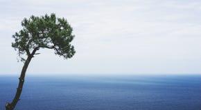 Eenzame pijnboomboom op achtergrondoverzees scape, golven van blauw stil oceaankustlandschap Van de het perspectiefmening van de  stock afbeeldingen
