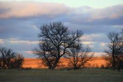 Eenzame Prairie Royalty-vrije Stock Afbeeldingen