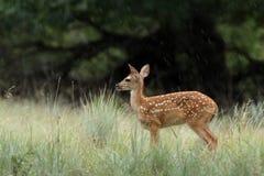 Eenzame Regen royalty-vrije stock afbeeldingen