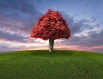 Eenzame rode boom op de gebied en zonsonderganghemel Stock Fotografie