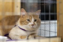 Eenzame rode witte kat die met hoop van rooster van cel kijken, en op eigenaar met huis wachten Concept het mensdom royalty-vrije stock fotografie