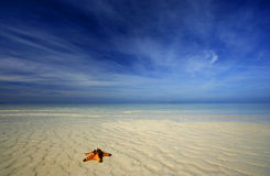 Eenzame rode zeester op wit zand Stock Foto's