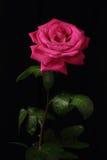 Eenzame rood nam toe Royalty-vrije Stock Foto