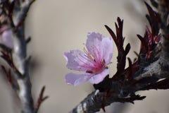 Eenzame Roze bloem Royalty-vrije Stock Afbeelding