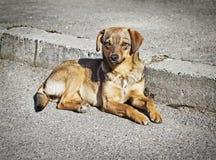 Eenzame slimme bastaarde hond in openlucht royalty-vrije stock afbeelding